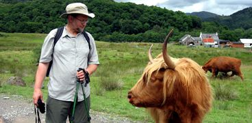Hiker and Highland Coo